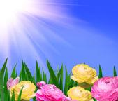 美しい花 — ストック写真