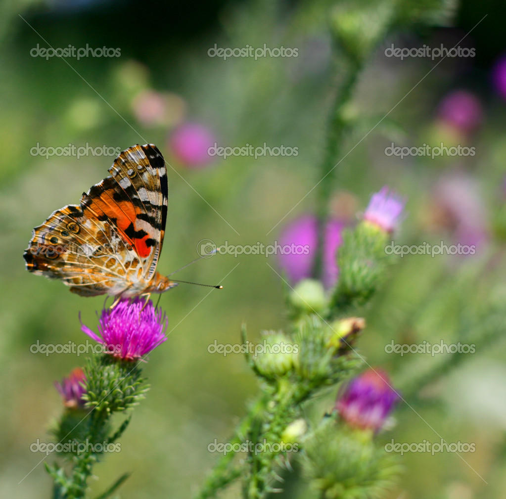 Butterflies on flowers — Stock Photo #1716493