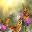 Butterflies on flowers — Stock Photo #1753040