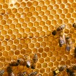 Honey comb and a bee working — Foto de stock #1774503