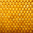 Stock Photo: Honey comb