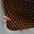 Honey comb and a bee working — Stockfoto
