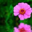 Pink flower — Stock Photo #1787012