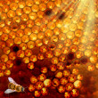 Stok fotoğraf: Honey comb and a bee