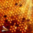 favo ed un'ape — Foto Stock