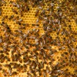 Stock Photo: Honey comb and a bee