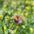 Butterfly — Stock Photo #1788164