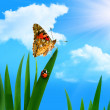 Ladybug and butterfly — Stock Photo #1789625