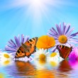 Flowers and butterflies - Stock Photo