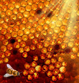 Honey comb and a bee — Stock Photo