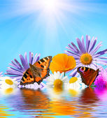 Flowers and butterflies — Stock Photo