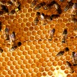 Stock Photo: Honey comb and bee