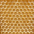 Honeycomb background — Stock Photo #1818794