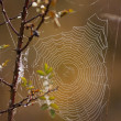 Spiderweb — Stock Photo #1613062