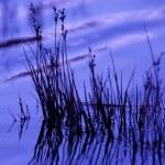 Purple glow — Stock Photo
