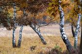 Lonely trees — Stock Photo