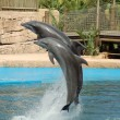 Dolphins Jumping — Stock Photo #1899954
