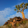 Stock Photo: Quiver tree landscape, Namibia