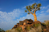 Quiver tree landscape, Namibia — Stock Photo