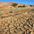 Dry river, Namib desert — Stock Photo