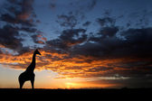 African sunset landscape — Stock Photo