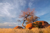 Granite boulders and trees — Stock Photo