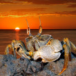 Ghost crab on rocks - Stock Photo
