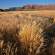 Stock Photo: Grassland landscape