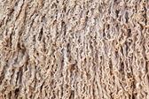 Angora goat wool background — Stock Photo