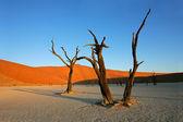 Tree and dune — Stock Photo