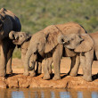 Stock Photo: Africelephants at waterhole