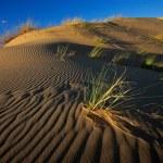 Grass and dune — Stock Photo #1871411