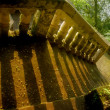 Stairs in green forest — Stock Photo