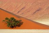 Dune, tree and grass — Stock Photo
