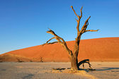 Tree and dune — Stock Photo