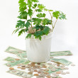 Royalty-Free Stock Photo: Young green plant on money
