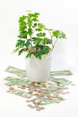 Young green plant on money — Stock Photo