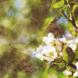 Stock Photo: Vintage spring background