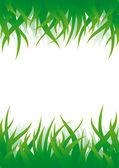 Green grass vector background — Stock Vector