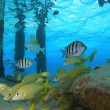 Schooling tropical fish - Stock Photo