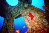 Shipwreck Helm — Stock Photo