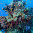 Tropical fish and coral, Fiji - Stock Photo