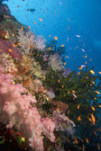 Tropical fish and coral, Fiji — Stock Photo