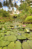 Lily Pad, HDR — Stock Photo