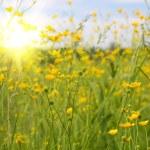 Солнечный день — Стоковое фото