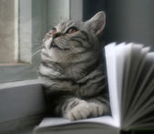 Cat reading a book — Stock Photo