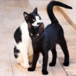 Two kittens — Stock Photo #1812287