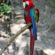 Blue and red Parrot — Stockfoto