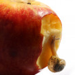 Stock Photo: Snail on red apple isolated