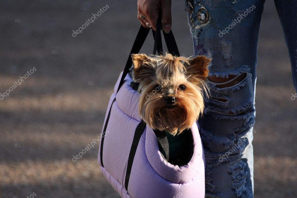 Decorative dog sitting in a bag — Stock Photo #1830477